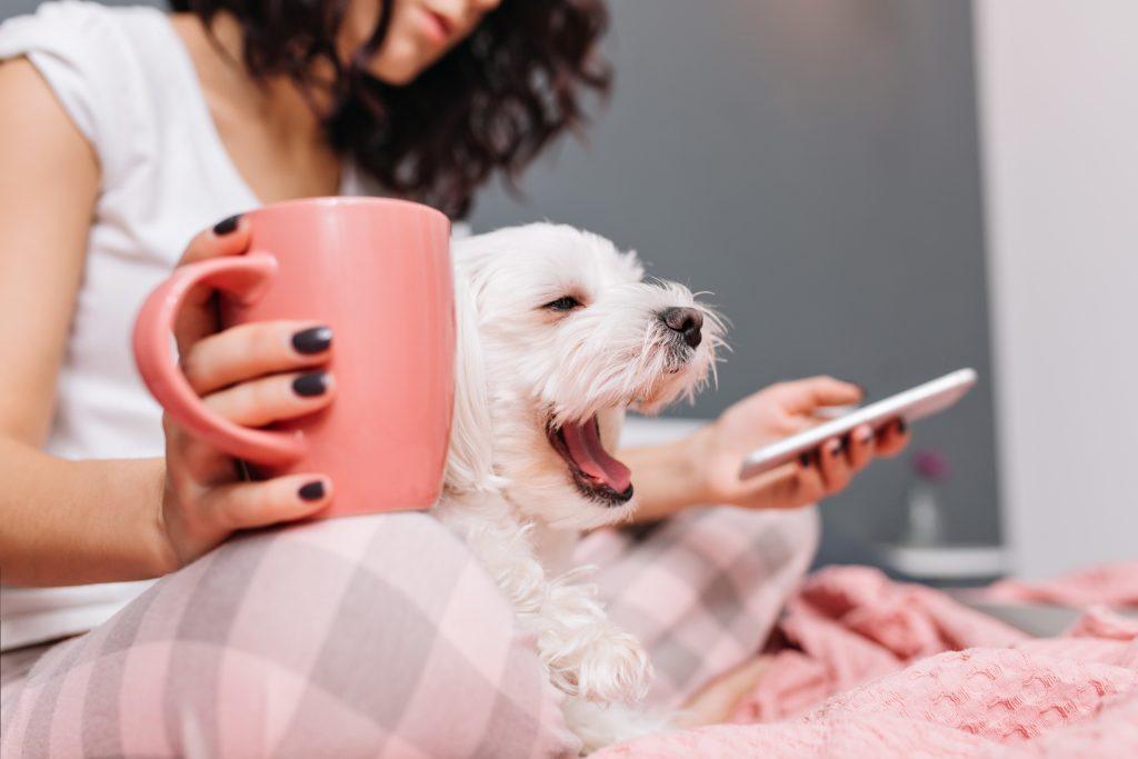 el primer significado del bostezo en perros es el sueño