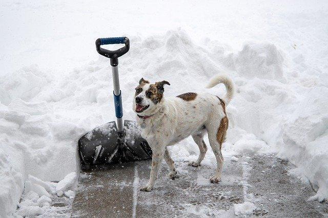 frío que puede soportar un perro