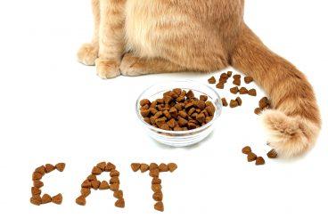 lenguaje de la cola de los gatos