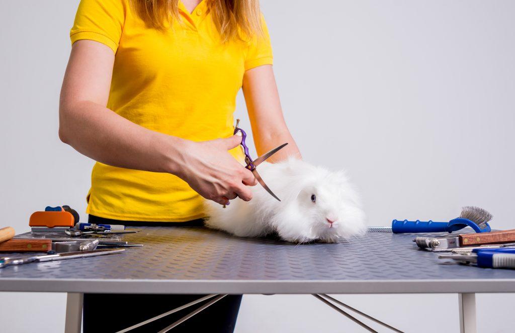 no cortes los nudos en el pelo del conejo si son muy grandes