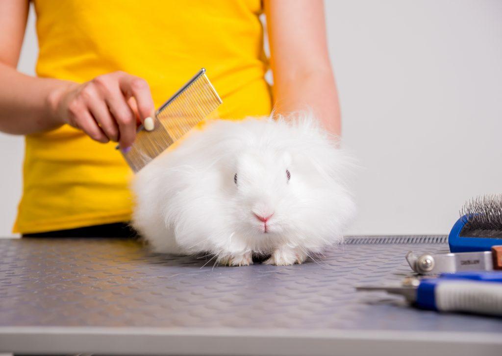 peinar es importante para evitar los nudos en el pelo del conejo