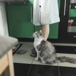 Por qué mi gato me sigue por casa