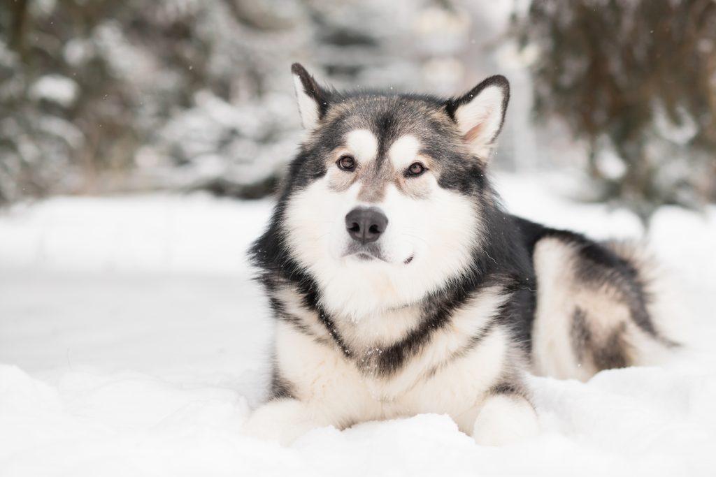 qué provoca los gases en perros