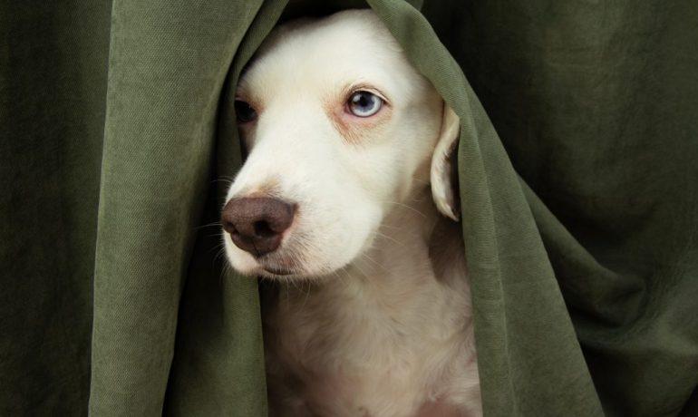síndrome de privación sensorial en perros
