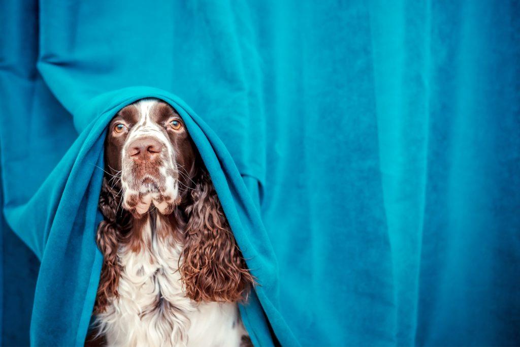 síntomas del síndrome de privación sensorial en perros