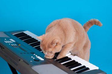 a los gatos les gusta la música
