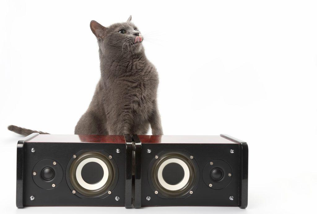 a los gatos les gusta la música tranquila