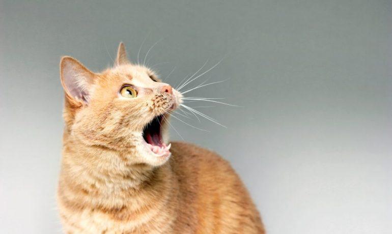 a mi gato le huele el aliento