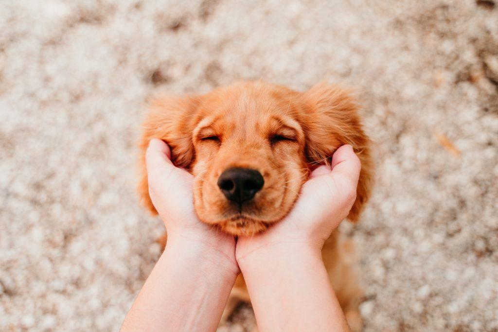 amar a tu mascota también es dedicarle tiempo