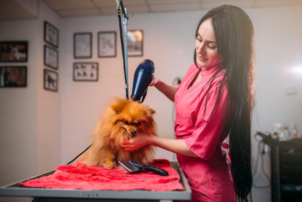 cómo usar el secador de pelo con el perro paso a paso