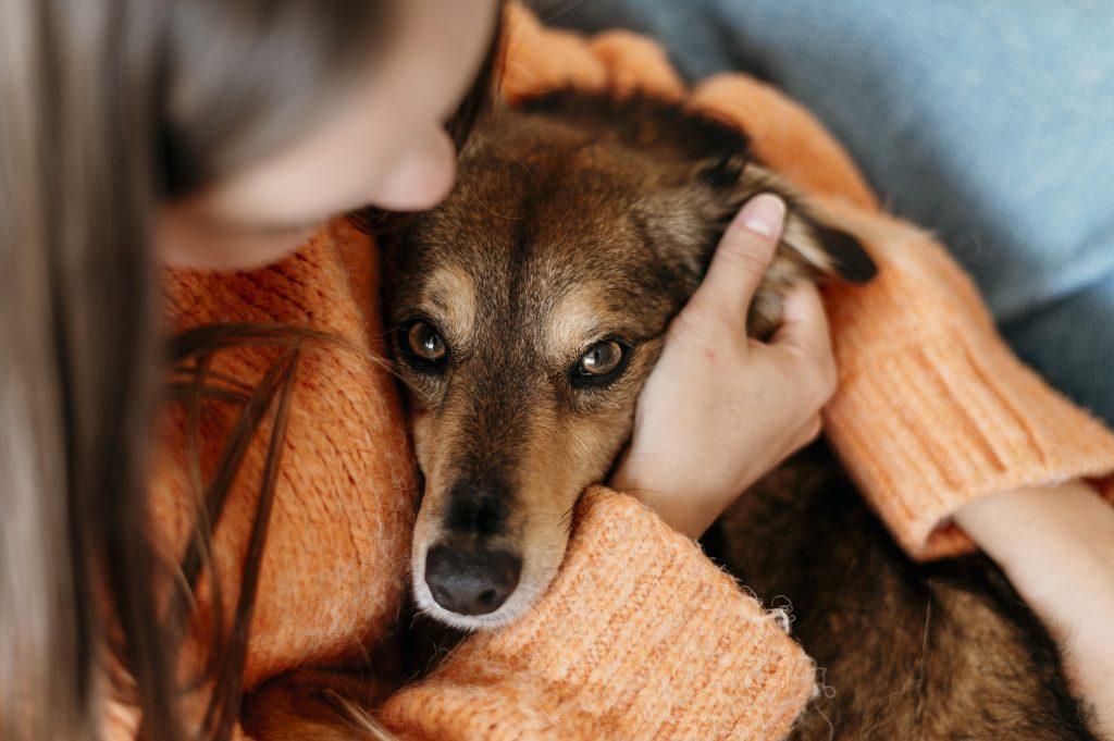 consejos para evitar la diabetes en perros