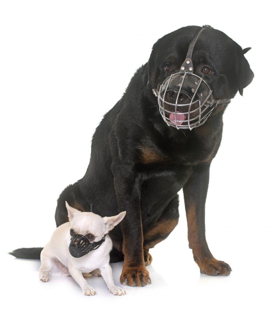 cosas a evitar con el bozal de tu mascota