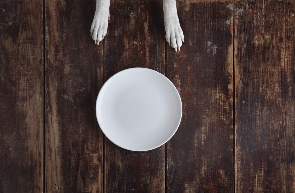 cuida la alimentación para evitar la diabetes en perros