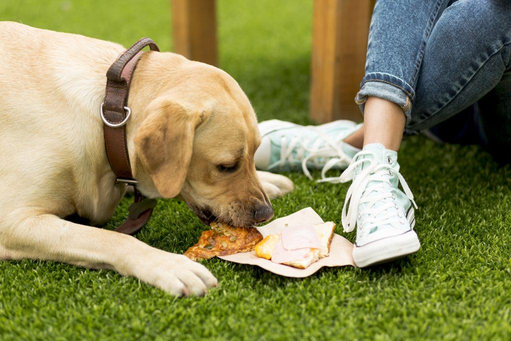 dar sobras de comida humana es uno de los errores en la alimentación de las mascotas