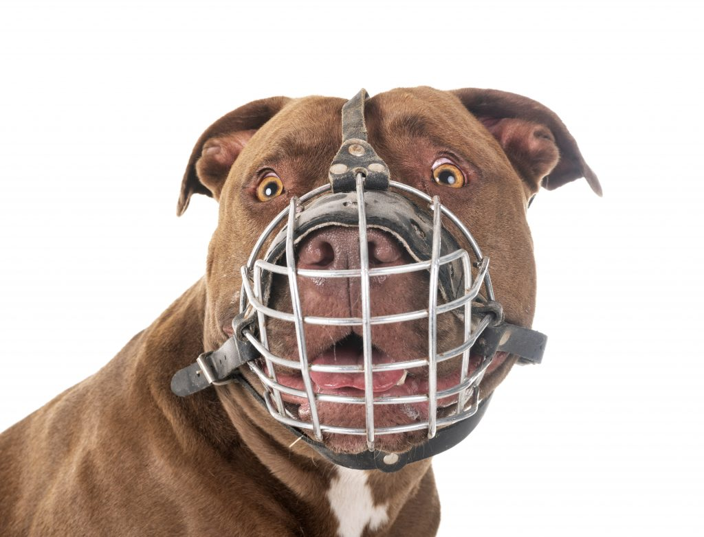 el bozal de tu mascota