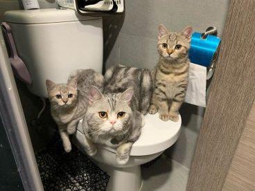 Fotos de gatos que no respetan el espacio personal en el baño