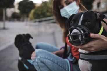 Lo que no debes hacer con el bozal de tu mascota