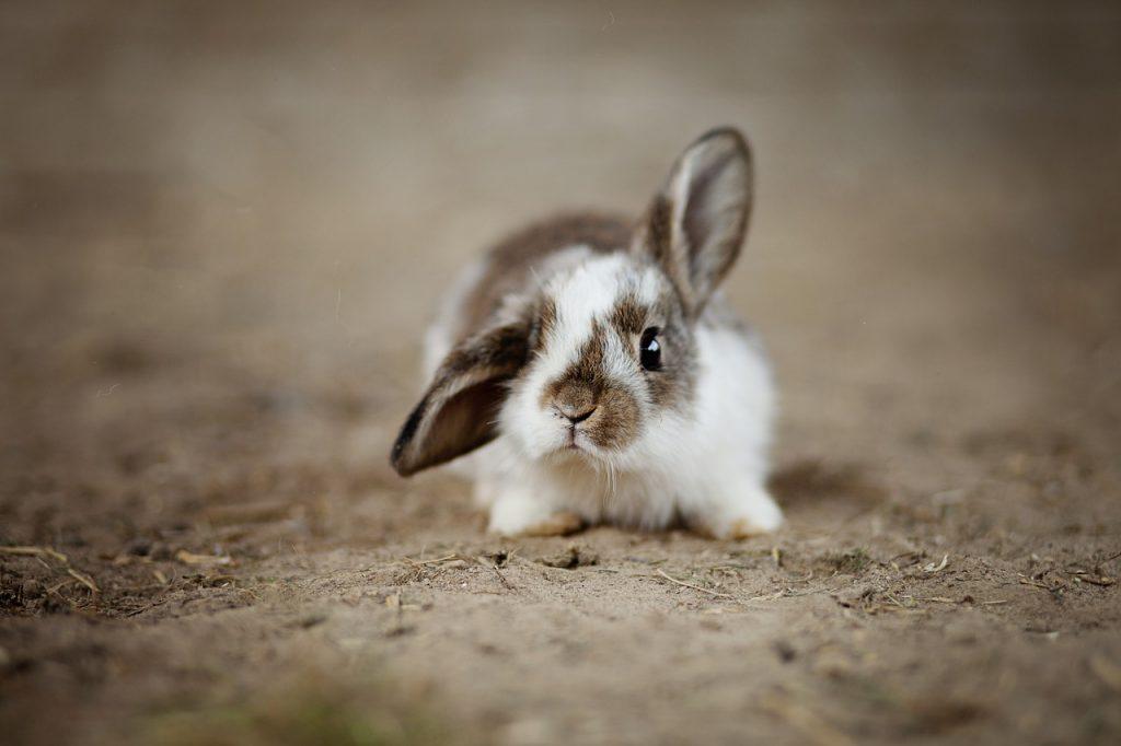 los cambios físicos son señales de dolor o enfermedad en conejos