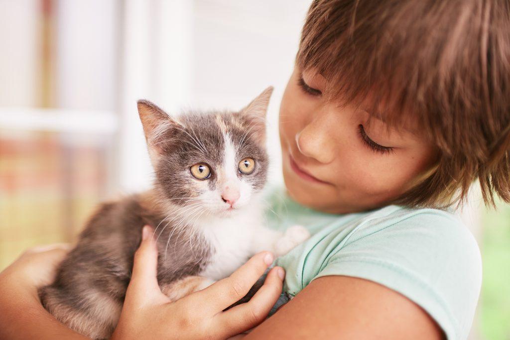 los gatos son de las mejores mascotas para niños