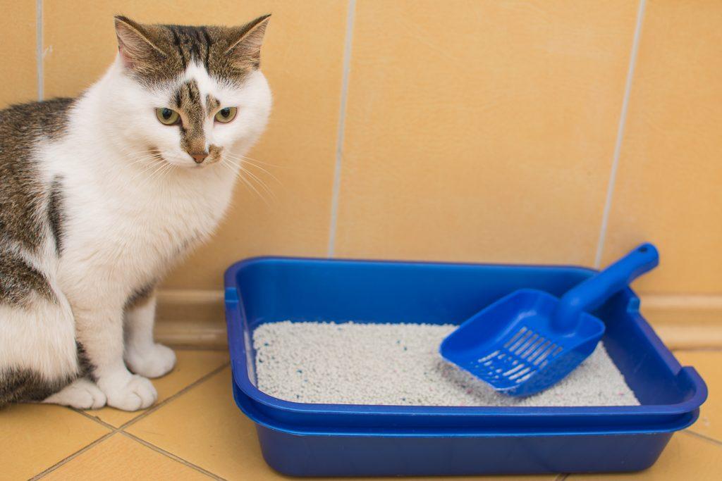 motivos por los que mi gato se come la arena