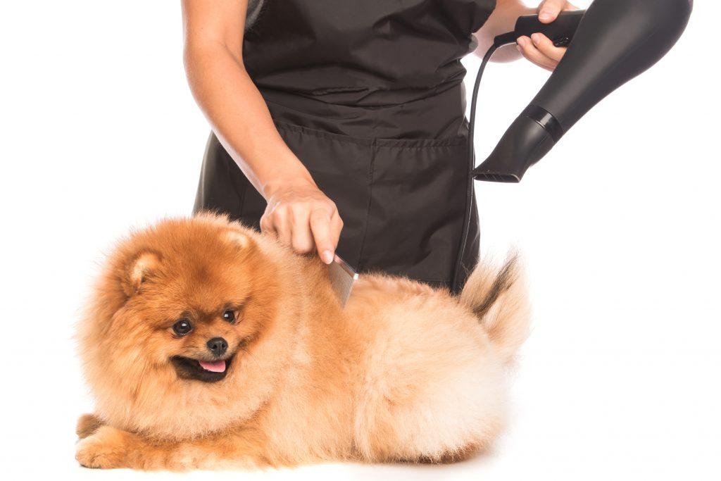 pasos previos a usar el secador de pelo con el perro