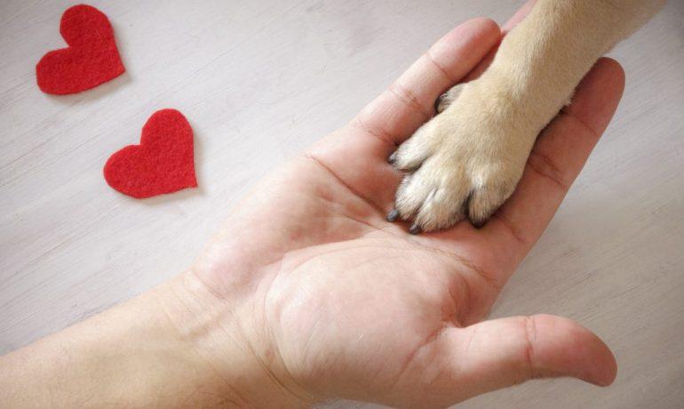 regala tiempo a tus mascotas