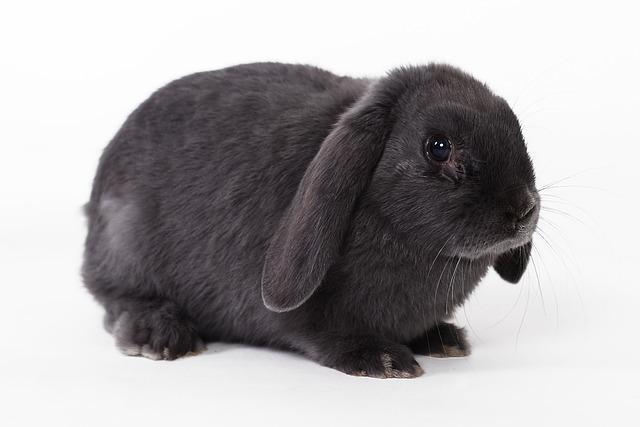 señales de dolor en conejos