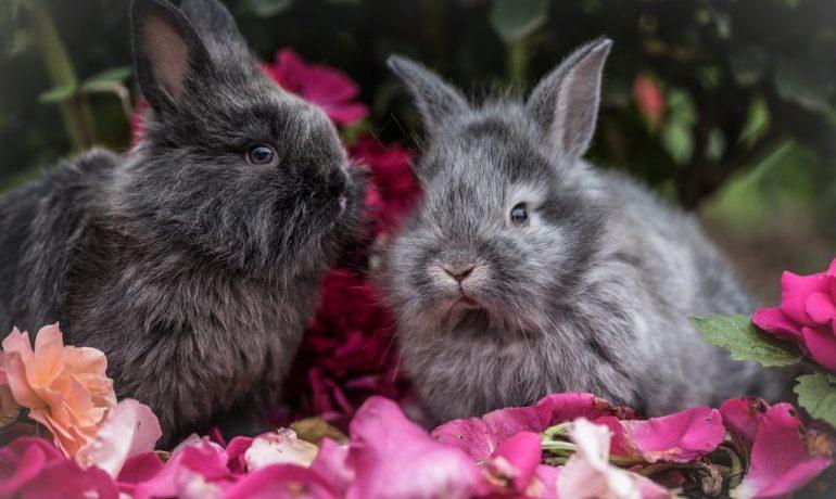 señales de dolor o enfermedad en conejos