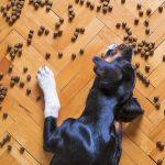 croquetas para perros influyen sus caracteristicas