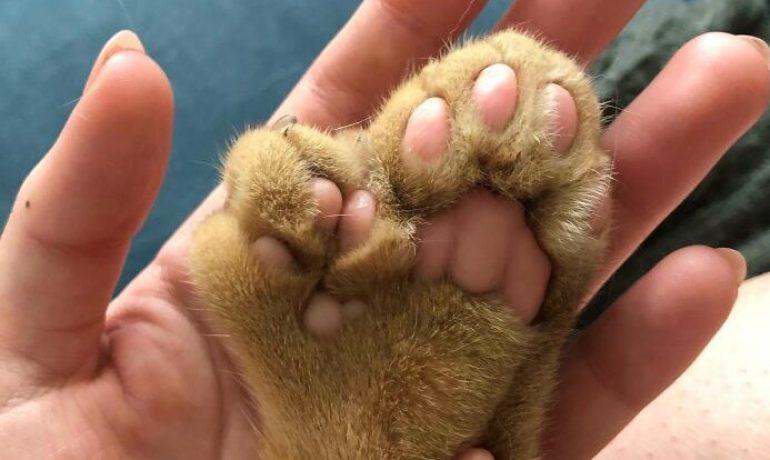 fotos de animales con defectos genéticos