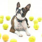 las pelotas de tenis no son buenas para perros