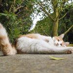 lesiones en la cola del gato
