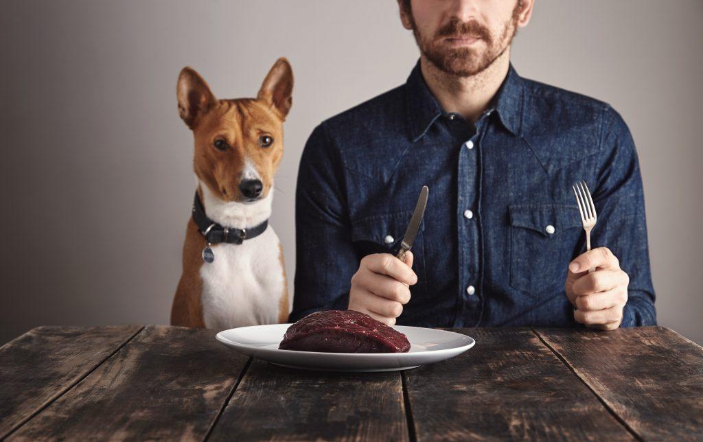 mi perro necesita adiestramiento si roba o reclama comida de la mesa