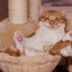 por qué hay que evitar el sedentarismo en mascotas
