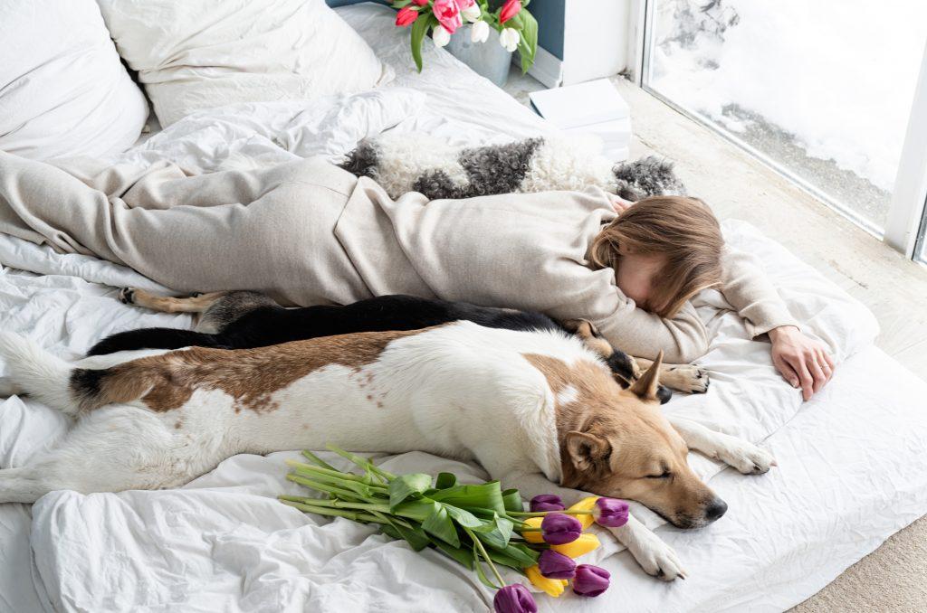 posturas de descanso en perros boca abajo con las patas estiradas