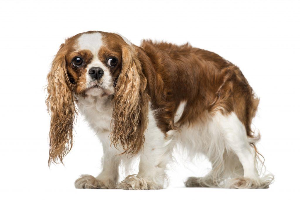 qué hago si mi perro me tiene miedo