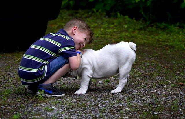 tips enseñar a los niños a cuidar de las mascotas