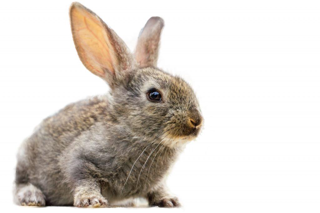 tips para prevenir la sarna en conejos