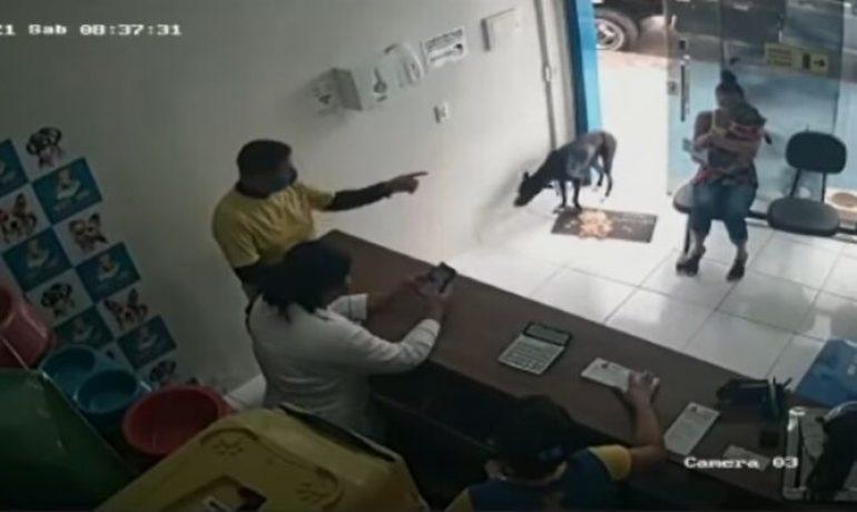 Un perro callejero entra en un centro veterinario para pedir ayuda