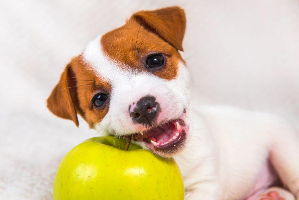 beneficios de la manzana para perros