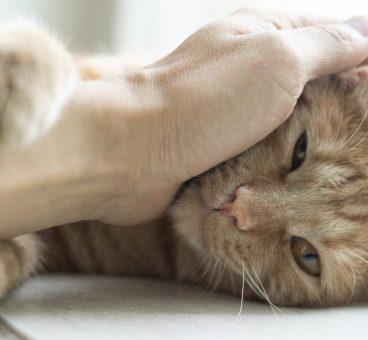 caspa en gatos causas más comunes