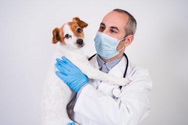 El número de nuevas mascotas ha aumentado desde la pandemia