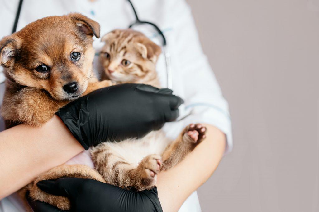 elegir a un buen veterinario es importante