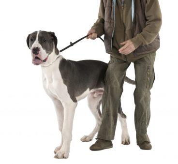 enfermedades en los perros grandes más comunes