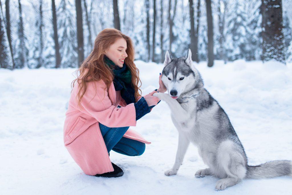 errores frecuentes al entrenar a un perro