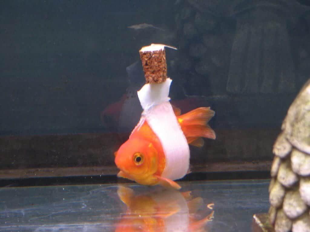 flotador con corcho para peces