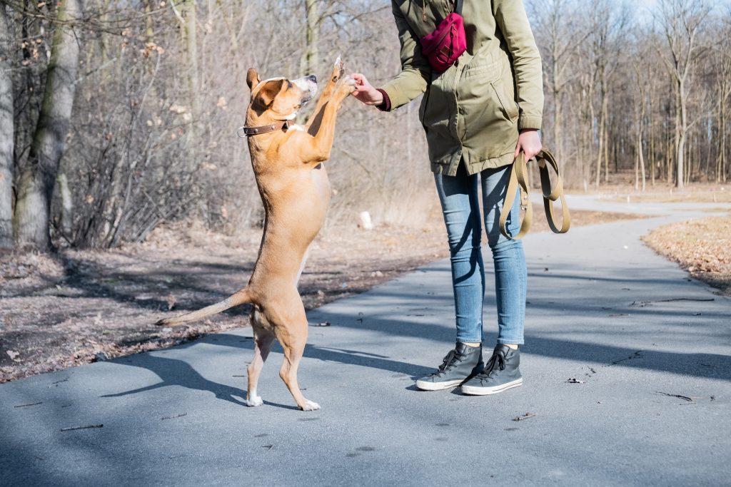 hay que ser coherente para no cometer errores al adiestrar a un perro