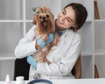 la importancia de elegir a un buen veterinario