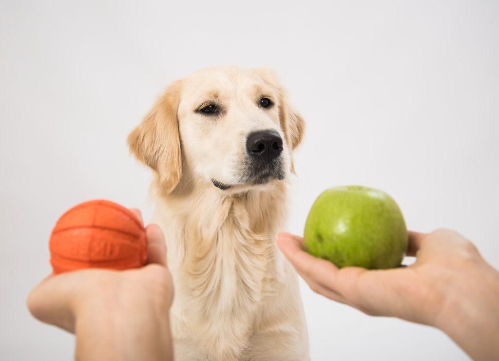 la manzana tiene beneficios para los perros