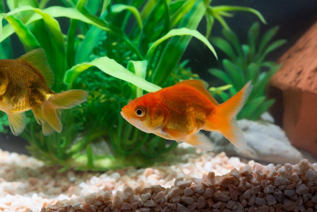 la vejiga natatoria de los peces les permite flotar